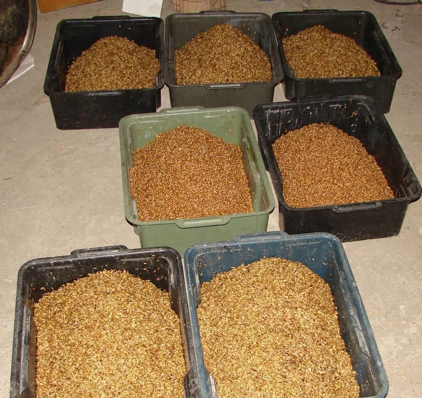 Готовим самогон из ячменя (ячменного солода)