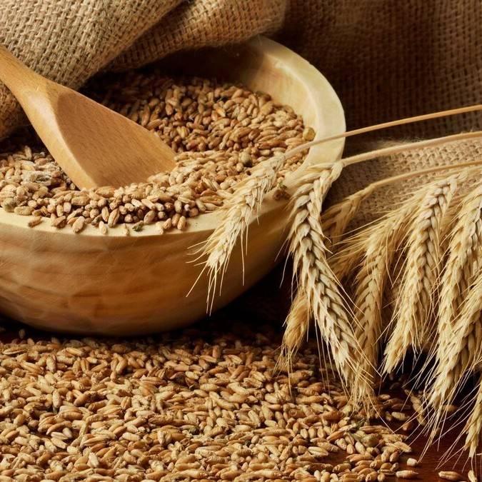 Самогон из пшеницы делаем сами