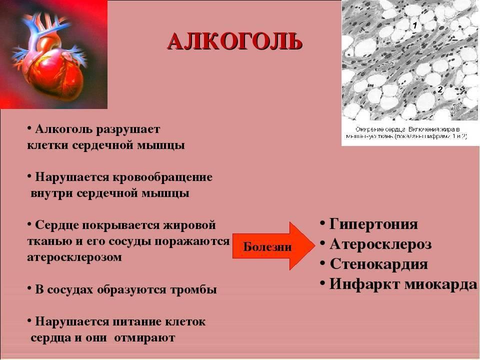 Спросите кардиолога алкоголь и здоровье сердца