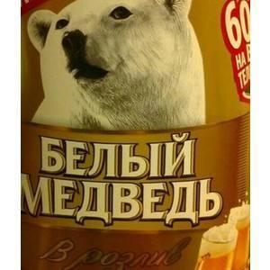 Белый медведь ? фото, описание, ареал, питание, враги ✔