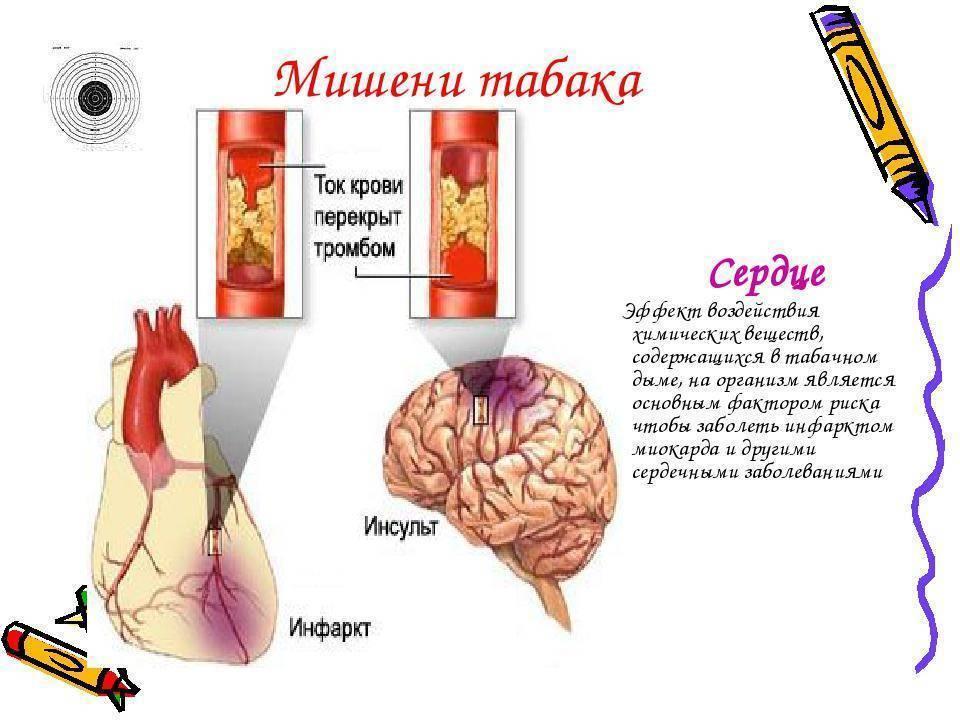 Влияние никотина и курения на кровеносные сосуды | vrednuga.ru