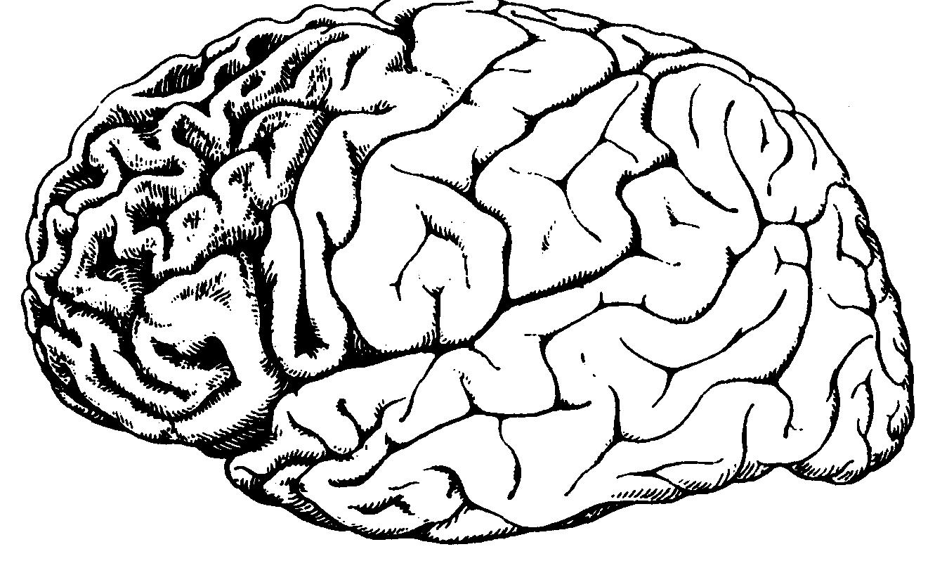 Сенильная дегенерация головного мозга: причины, лечение, прогноз — онлайн-диагностика