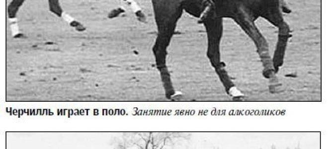 «это все придумал черчилль…» – легенда о 50-градусном коньяке «двин»