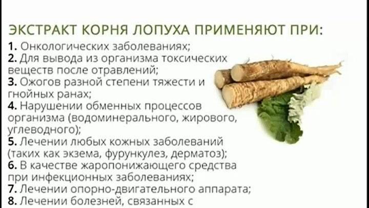 Готовим отвары и настои лопуха - рецепты, советы готовим отвары и настои лопуха - рецепты, советы