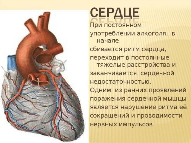Сильно бьётся сердце после алкоголя. что делать?