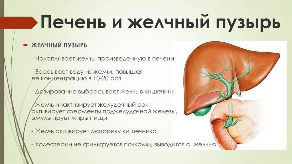 Желчный пузырь заболевания и алкоголь