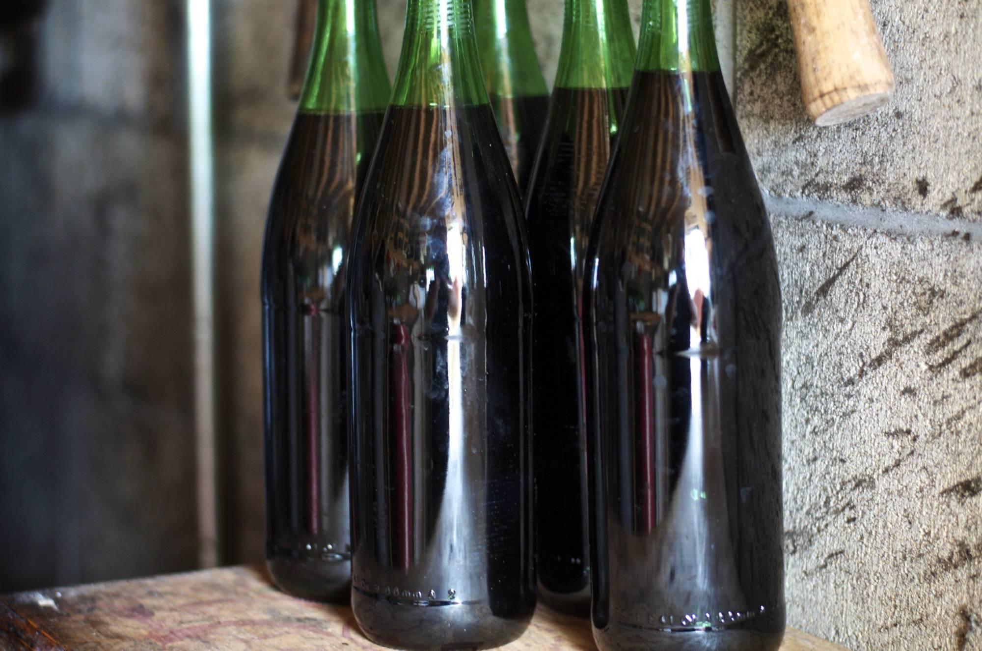Домашнее виноделие это не только вкусно, но и полезно: как это работает