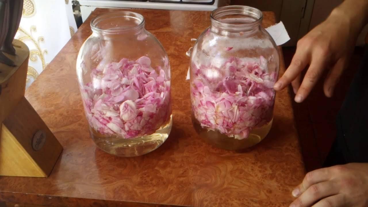 Вино из лепестков роз простой рецепт приготовления