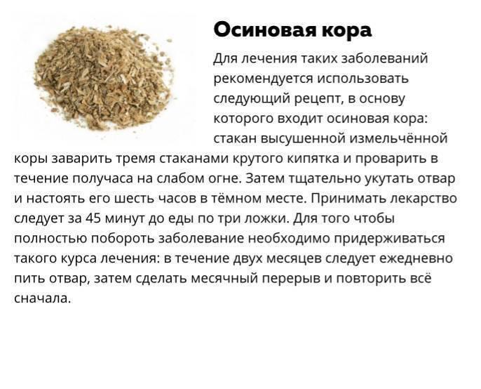Кора осины: лечебные свойства и противопоказания
