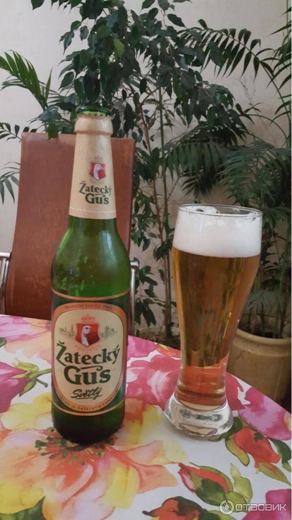 Где указан срок годности на пиво жатецкий гусь