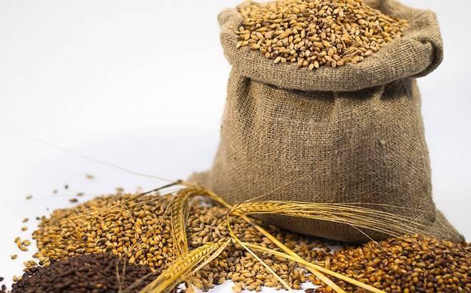 Как сделать солод в домашних условиях: ржаной, ячменный, пшеничный