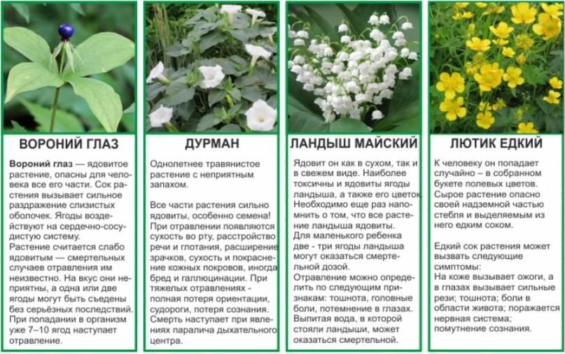 Отравление ядовитыми техническими жидкостями, симптомы и первая помощь | rvdku.ru