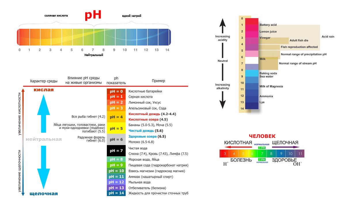 Важно! роль рн и кислотно-щелочного равновесия в организме