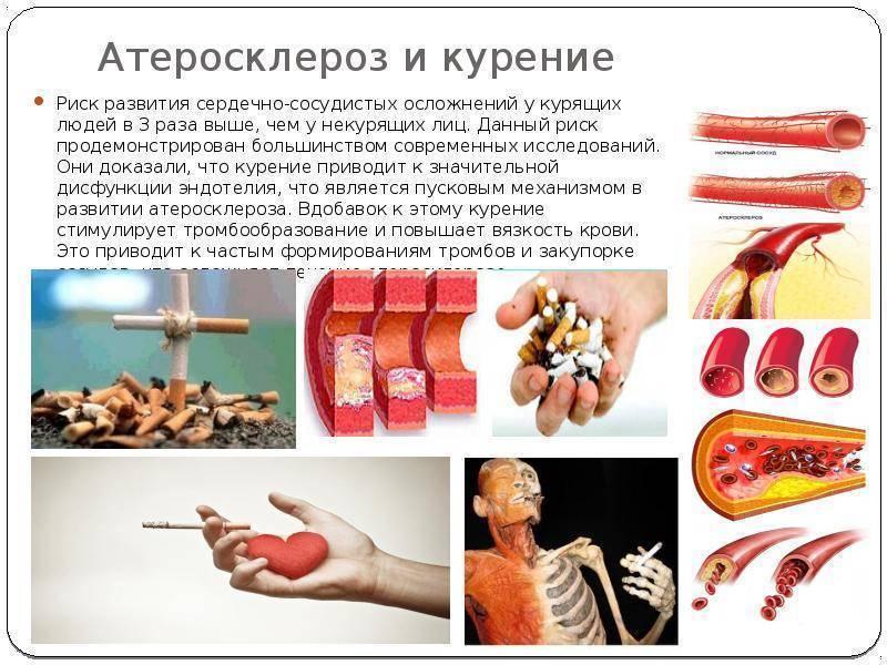 Как быстро нормализуется холестерин после прекращения курения. курение, алкоголь и повышенный холестерин