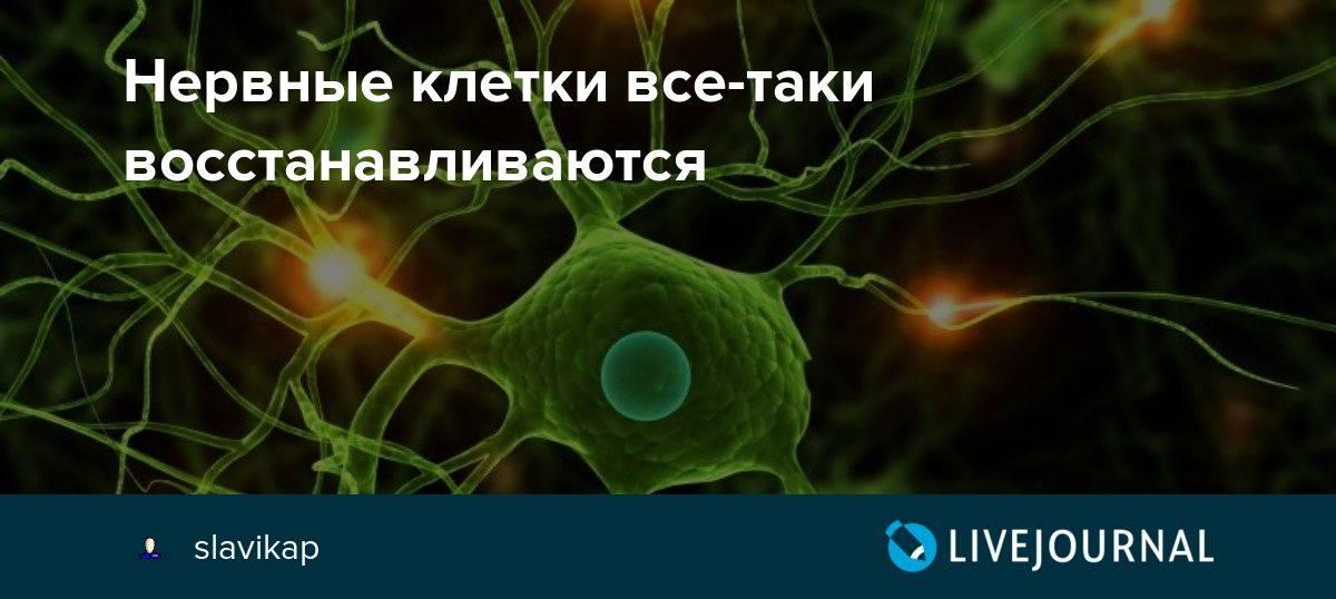 Нервные клетки: и всё-таки они восстанавливаются! - welltory