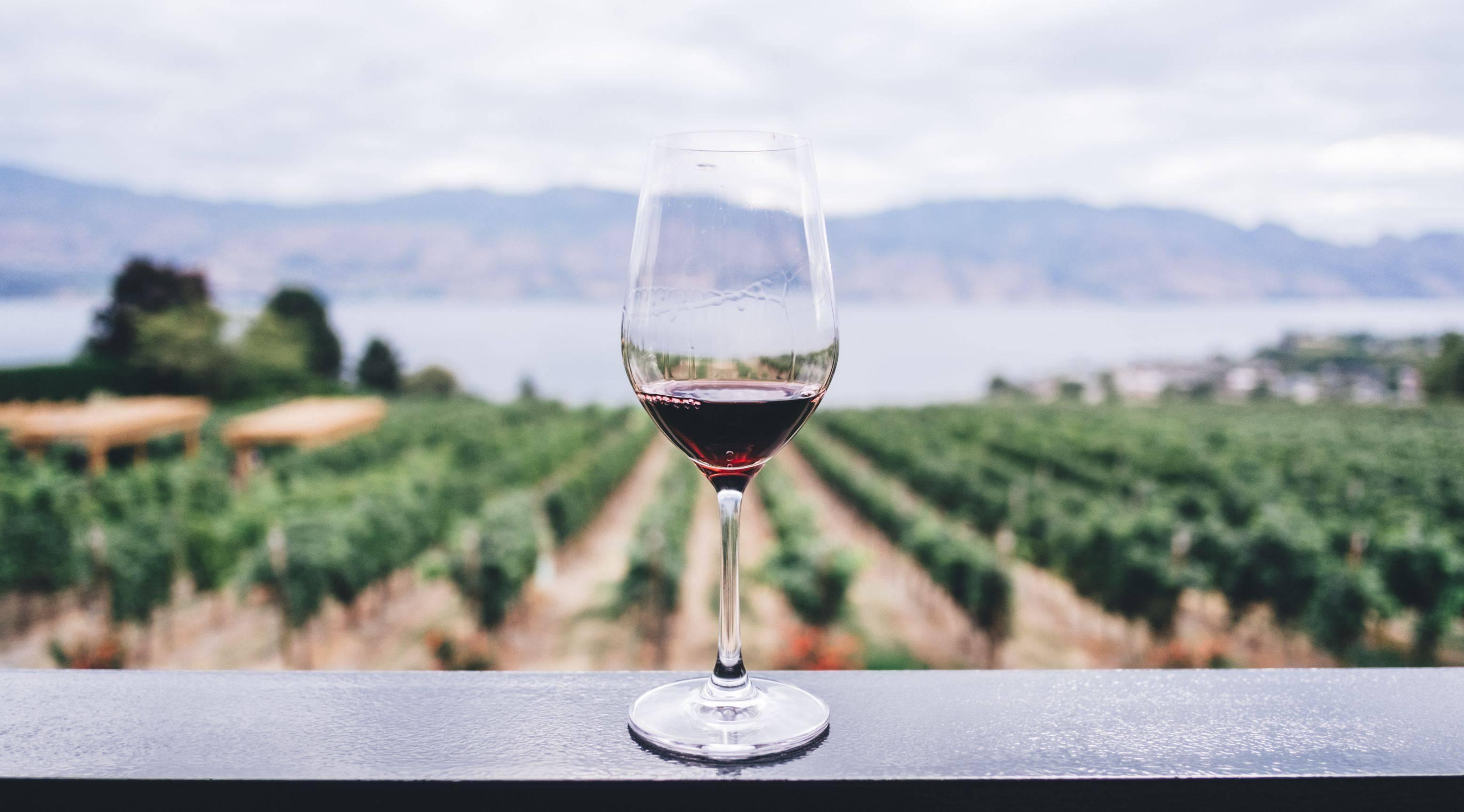 Если солнечные лучи имеют вкус – это вкус vinho da madeira!