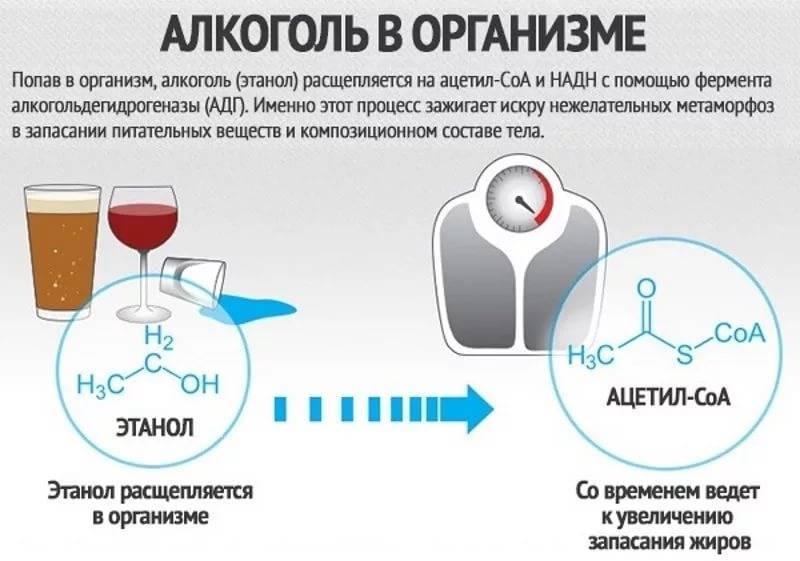 Сколько спирта вырабатывает организм человека в сутки. миф. алкоголь специально вырабатывается организмом, значит, он безвреден и даже полезен