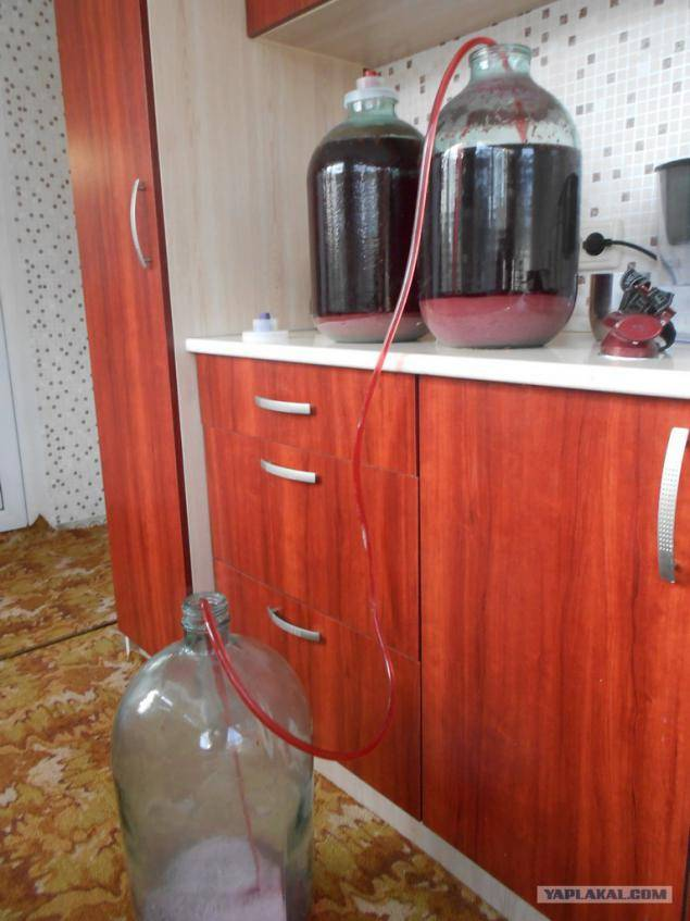 Как отфильтровать вино от осадка. осветление домашнего вина на практике