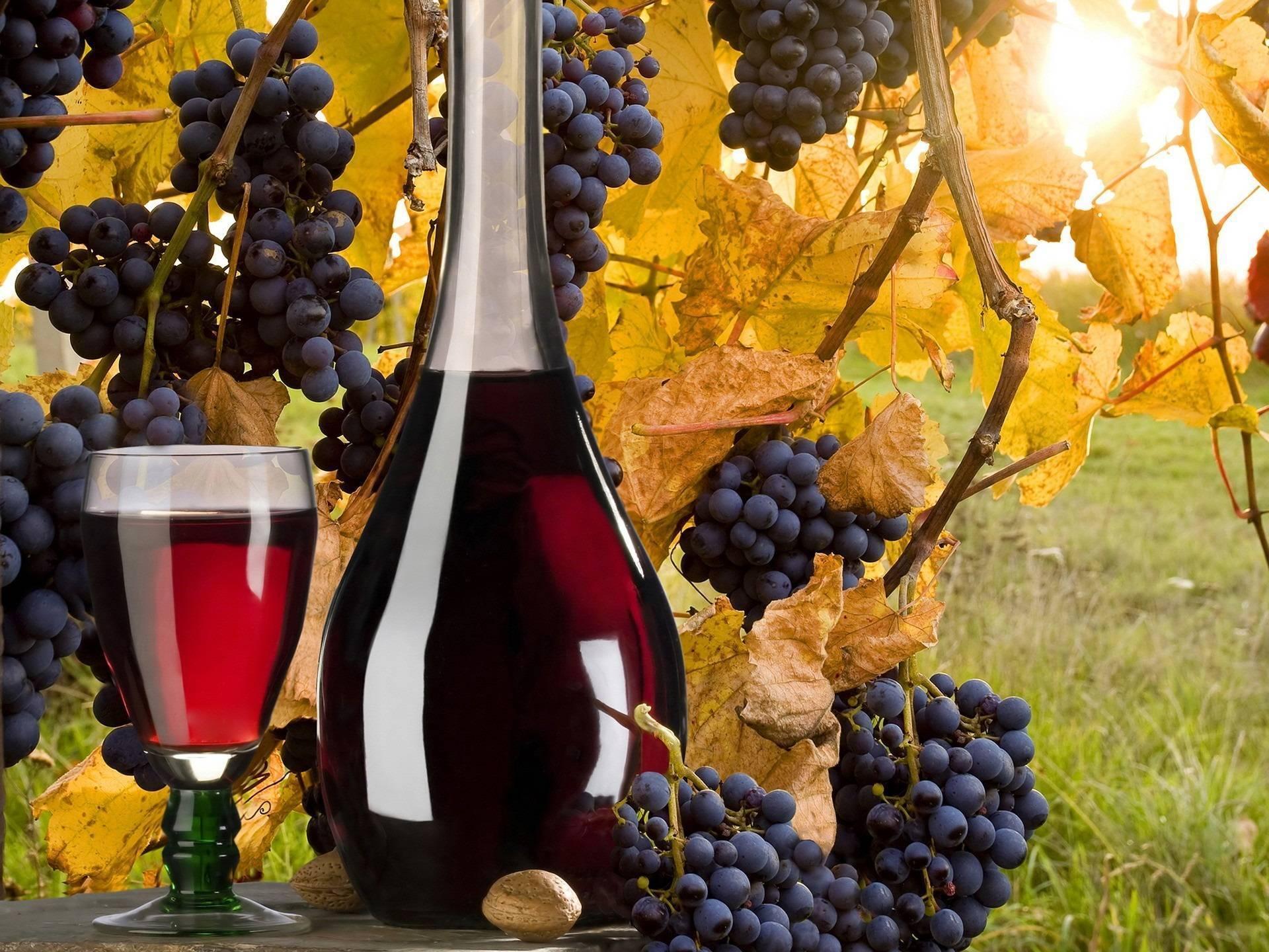 Готовим домашнее вино из красного винограда: условия, этапы, советы и тонкости
