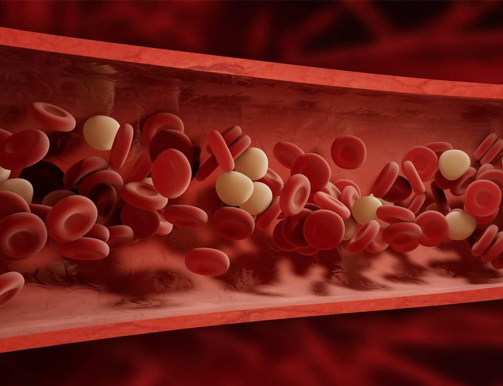 Влияние коньяка на гемоглобин