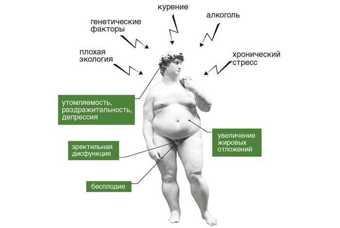 Женские гормоны в пиве: содержится ли эстроген, как он влияет на женский организм, в каком пиве меньше гормонов