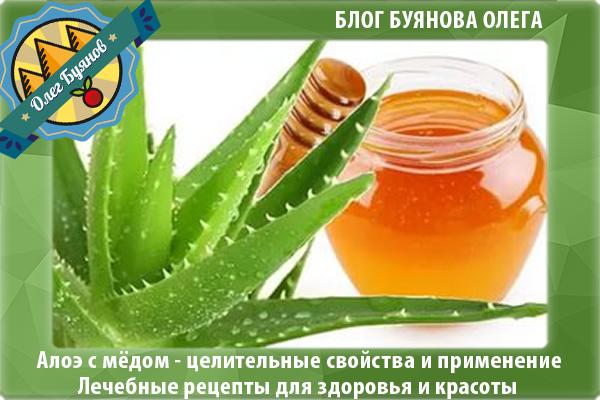 Настойка из алоэ, мёда и кагора: тройная сила в борьбе с различными недугами