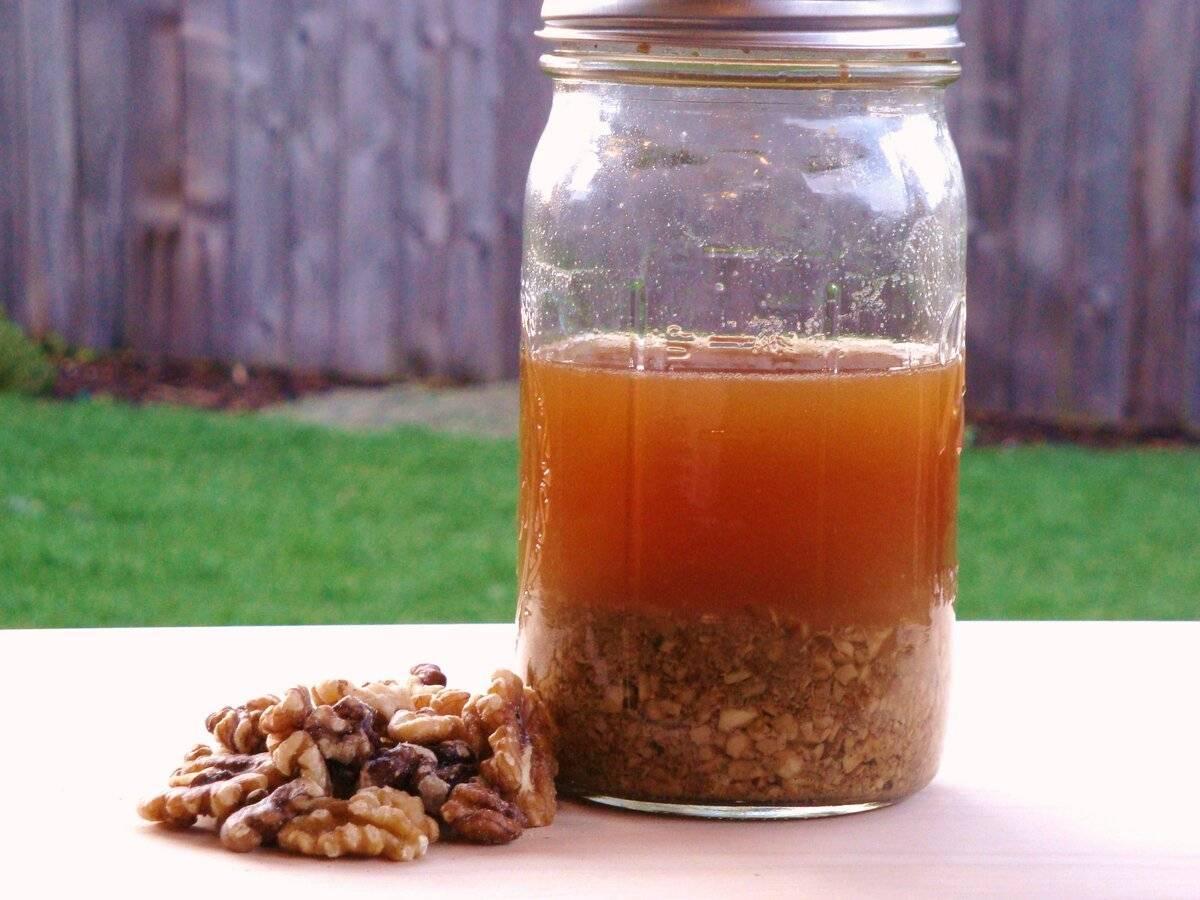 Делаем чудо-настойку на самогоне на перегородках грецкого ореха – универсальный рецепт