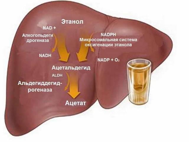Можно ли пить алкоголь после удаления желчного пузыря