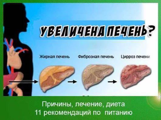 Увеличение печени на 2 см у взрослого: причины, симптомы и лечение