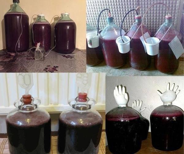 Домашнее сливовое вино — лучшие рецепты изготовления
