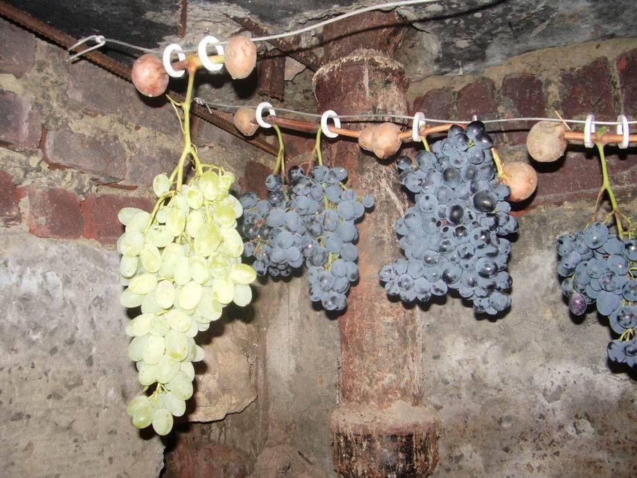 Как вырастить саженцы винограда своими руками