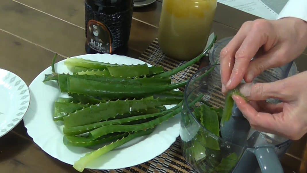 Настойка алоэ с медом на водке: рецепт, противопоказания