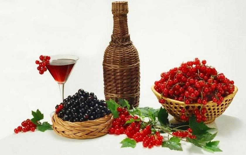 Вино и настойки из смородины – как приготовить в домашних условиях