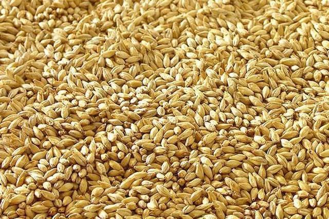 Приготовление в домашних условиях ячменного пшеничного ржаного солода как проращивать рожь проращивание ячменя