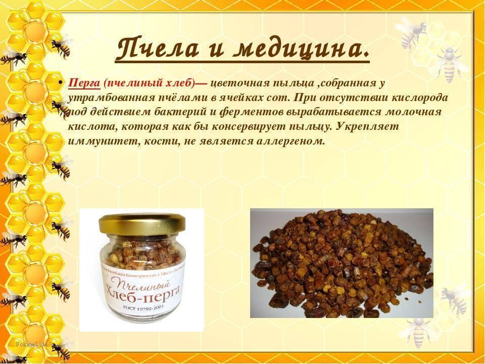 Пчелиный подмор: настойка на спирту применение, от чего помогает и что лечит?