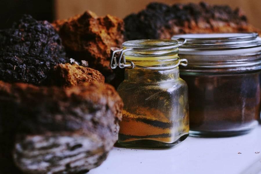 Самогон на чаге: настойка в домашних условиях, рецепт приготовления из чаги березовой