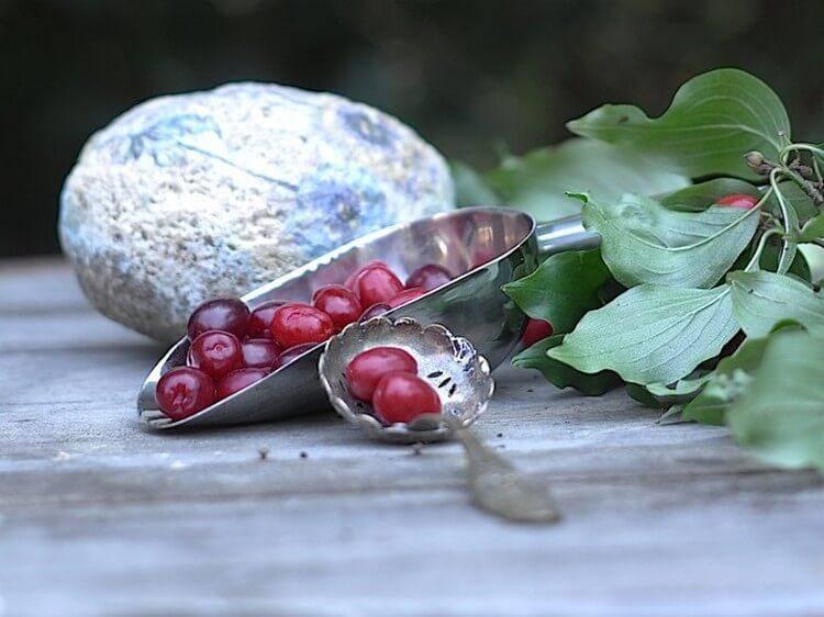Как сделать самогон из ягод кизила. приготовление кизиловой настойки