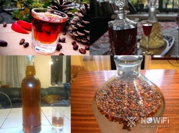 Кедровка на самогоне — рецепты приготовления напитка