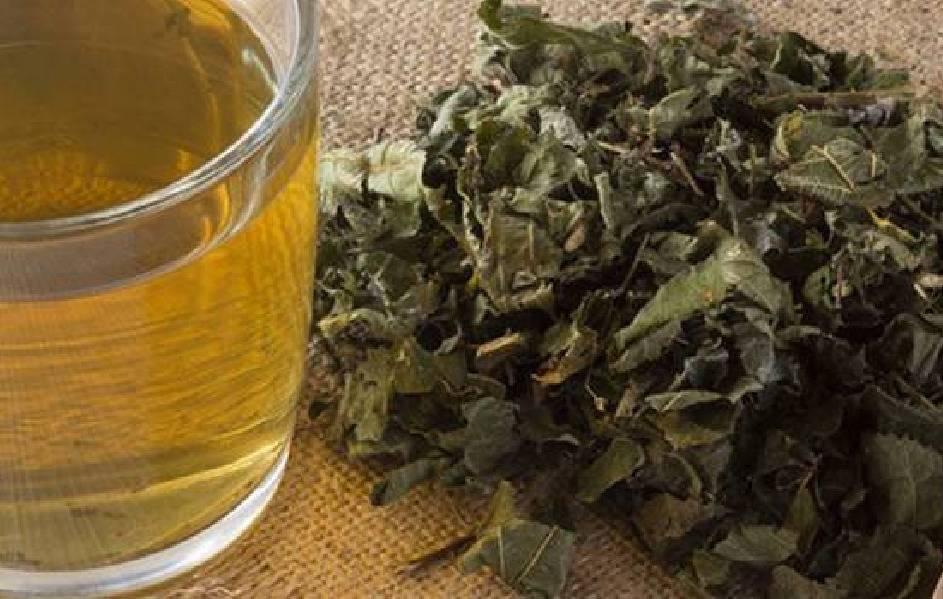 Травы от алкоголизма: как выбрать в аптеке, которые реально помогают от пьянства, рецепты настоев и отваров для лечения в домашних условиях | suhoy.guru