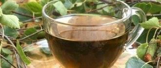 Польза и применение настойки березовых почек на водке