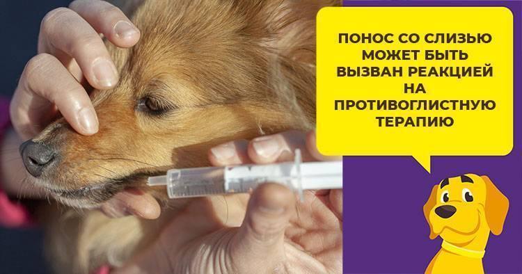Как лечить рвоту у собаки в домашних условиях?