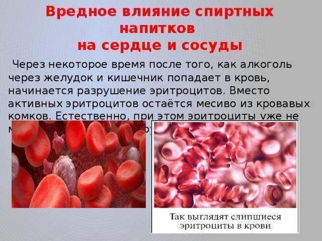 Как алкоголь влияет на холестерин в крови? | osostavekrovi.com