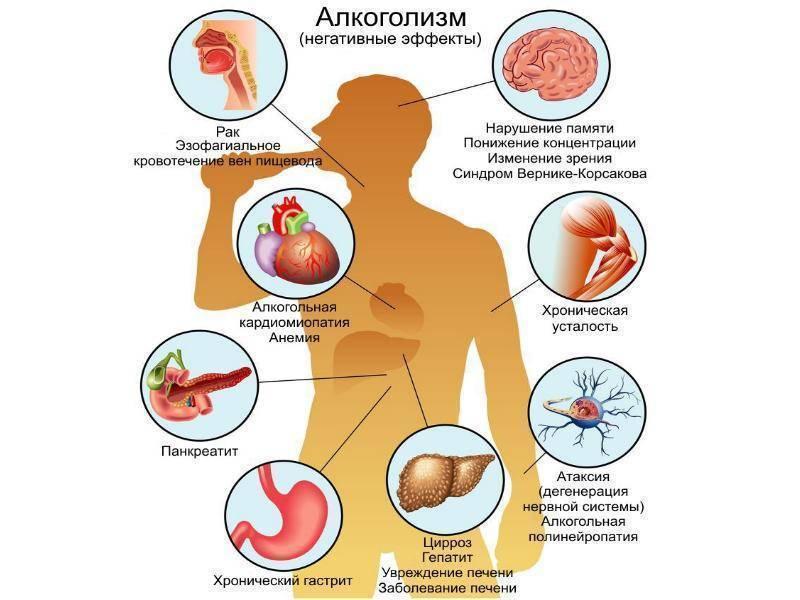 Прививка от бешенства человеку и алкоголь состав препарата, совместимость с алкоголем, дозировка, последствия совместного приема