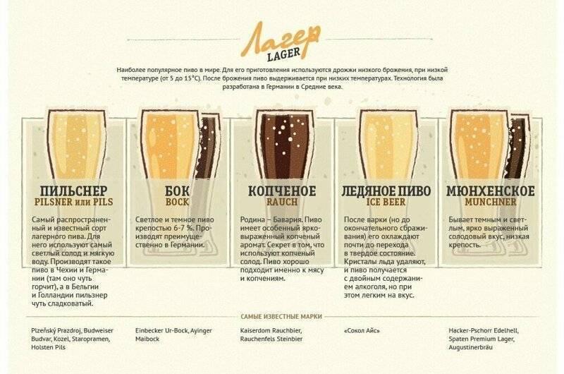 Все этапы брожения пива. какая бродильная емкость используется?