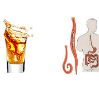 Убивает ли алкоголь глистов, как спирт влияет на гельминтов, бывают ли они у алкоголиков?