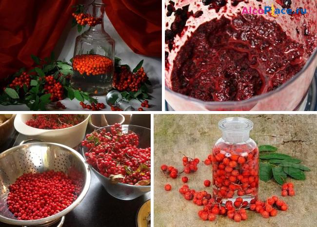 Делаем вино из красной рябины (и яблок)