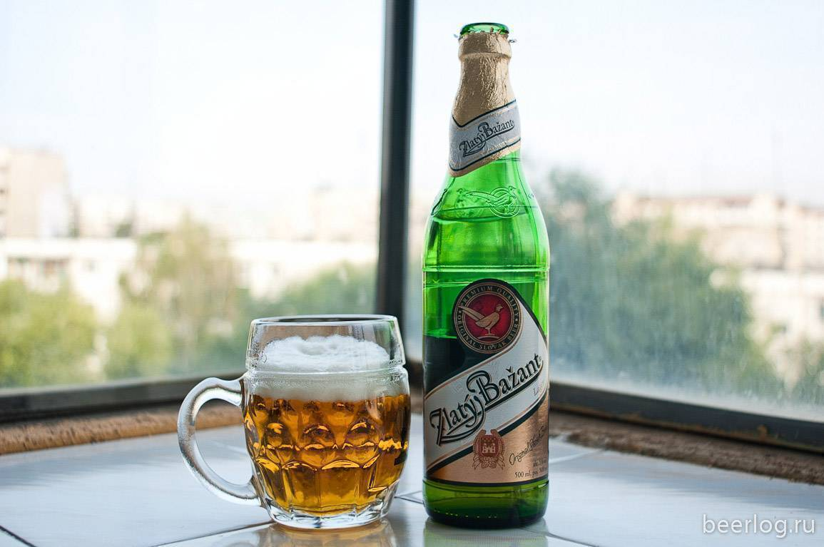 Пиво златый базант (zlaty bazant): обзор напитка, история производства и отзывы