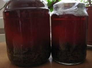 Как приготовить бобровую струю в домашних условиях? настойка на спирту