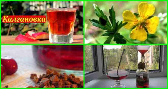 Самогон на калгане – кофейная и ореховая калгановка, лучшие рецепты приготовления из лапчатки прямостоячей в домашних условиях, польза и вред