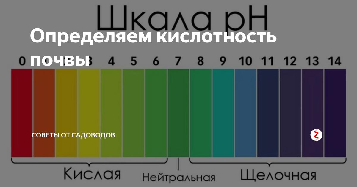 Водородный показатель (ph) некоторых распространенных продуктов питания. кислотность. - инженерный справочник dpva.ru / технический справочник дпва / таблицы для инженеров (ex dpva-info)
